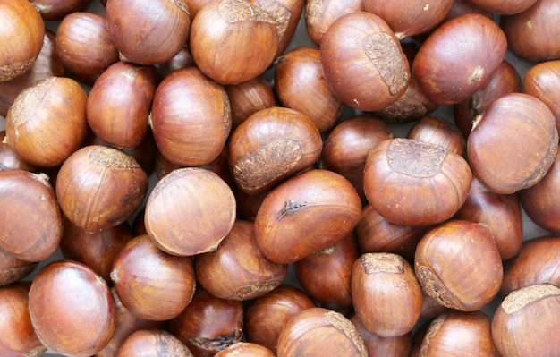 Close up chestnut.