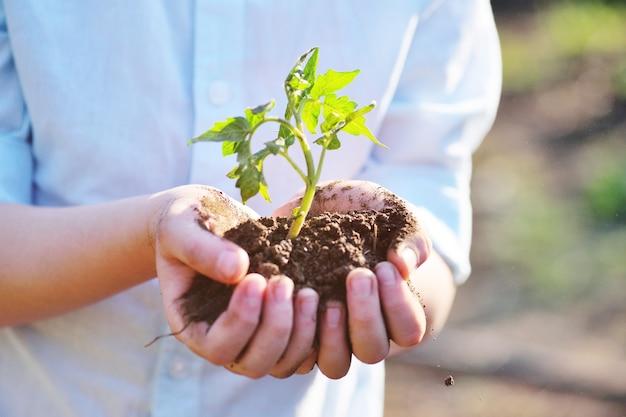 クローズアップ-子供の手は、緑の芽や苗で一握りの地球を保持しています。ガーデニング、エコロジーの概念