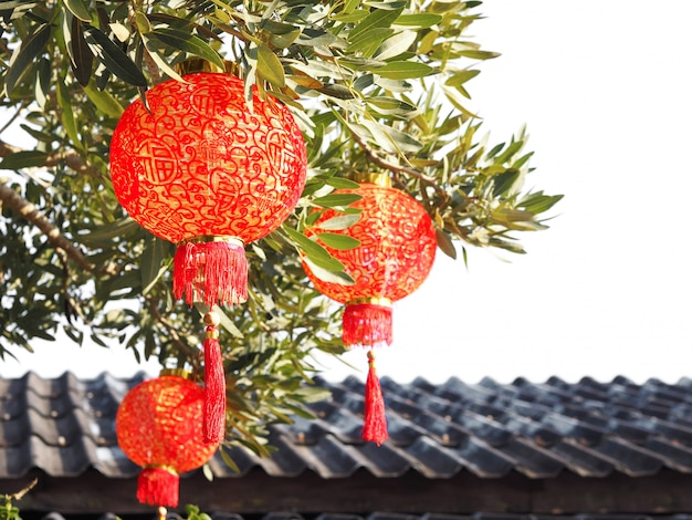 Close up chinese lantern on tree over roof.