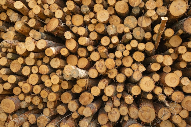 Close up of chopped and stacked a wood, forest