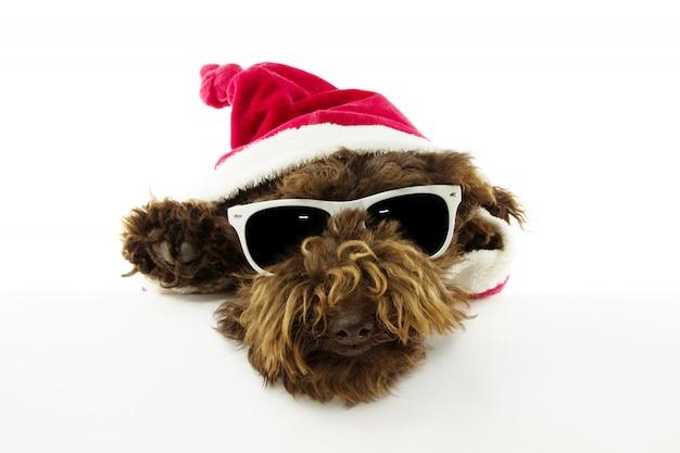 Закройте вверх по собаке рождества одетой как санта клаус с краем лапок белого пробела.