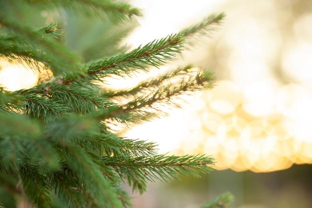 Close-up of a christmas tree on a bokeh lights.