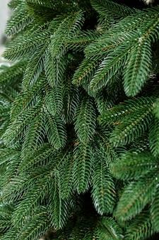 Елка крупным планом без игрушек. новогоднее настроение. ветки зеленой елки крупным планом