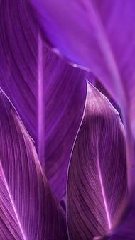 Primo piano di sfondo per cellulare con foglie di fiori di sigaro