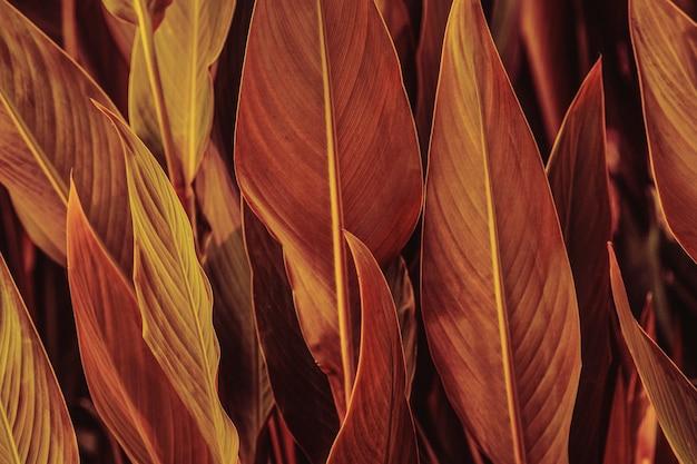 Primo piano di foglie di fiori di sigaro