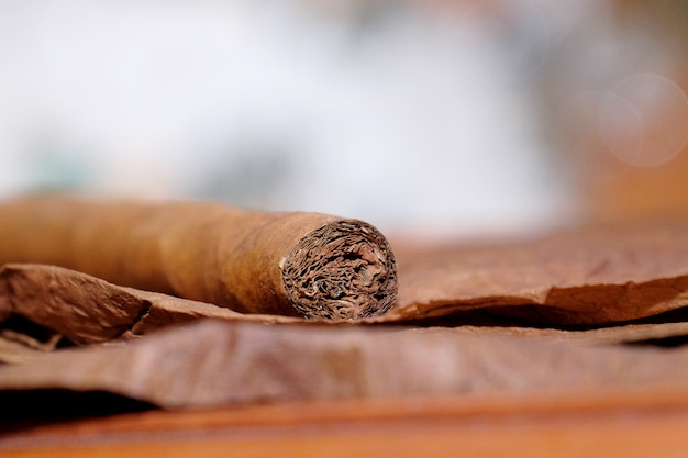 Close up of cigar on the tobacco leaves