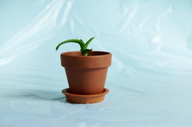 アロエ植物のクローズアップ土鍋