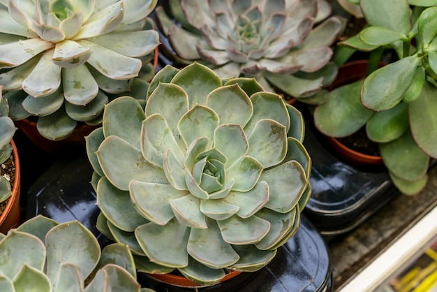 Close-up collection of house plants