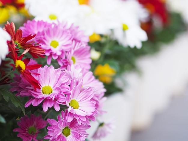 다채로운 gerbera 데이지 꽃을 닫습니다. 봄과 여름 시즌을 위한 꽃 꽃다발.