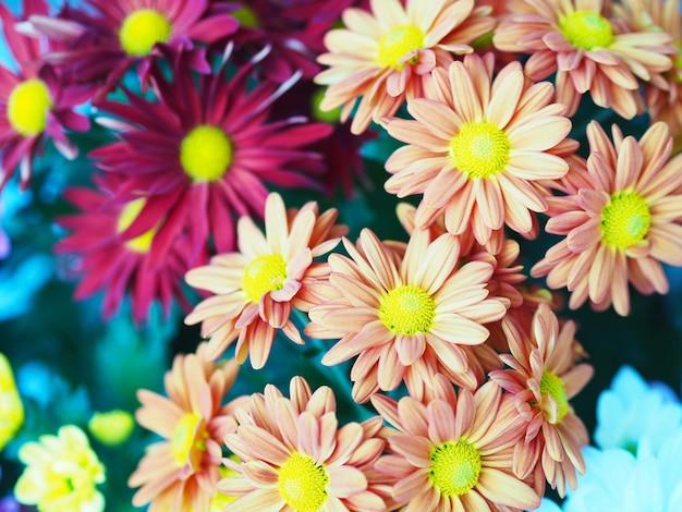 다채로운 gerbera 데이지 꽃을 닫습니다. 봄과 여름 시즌을 위한 꽃 꽃다발입니다.