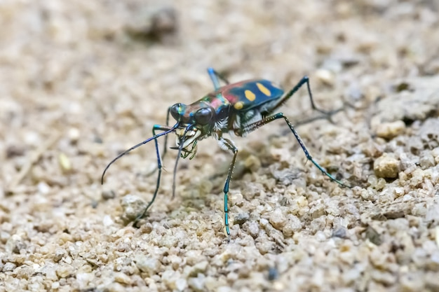 Close up of colorful insect with long legs