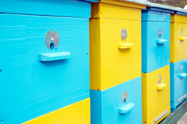 Close up of colorful yellow and blue bee hives