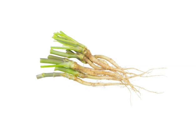 Close up coriander roots isolated on white