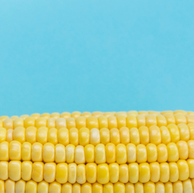 Close-up of a corn cob against blue background