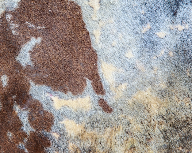 Close up cow hide as background