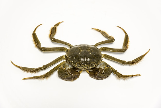Close-up of crab with claws