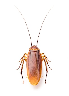 Close up of creepy cockroach isolated on white background
