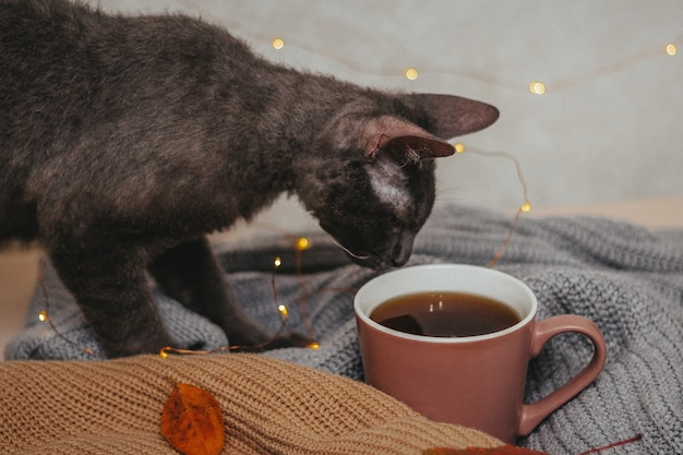 Close up cup of coffee with a cat