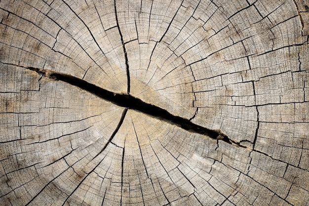 Close up of cut wooden stump with cracks and annual rings as pattern.