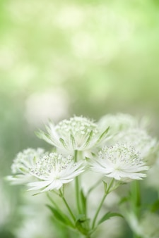 Close up of cute and beauty mini white and green flower on blurred greenery