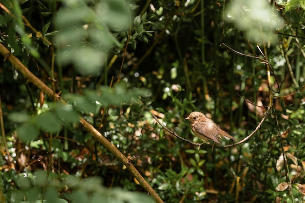 Close up on cute bird in the woods Free Photo