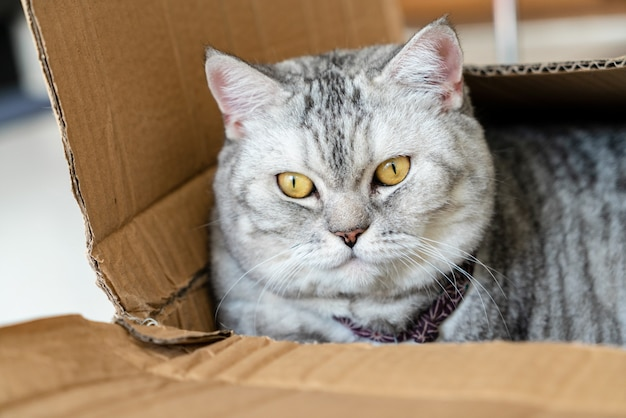 Close up cute cat sleep in box.  pets concept