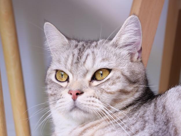 Крупным планом милый кот с красивыми желтыми глазами на белом фоне в гостиной