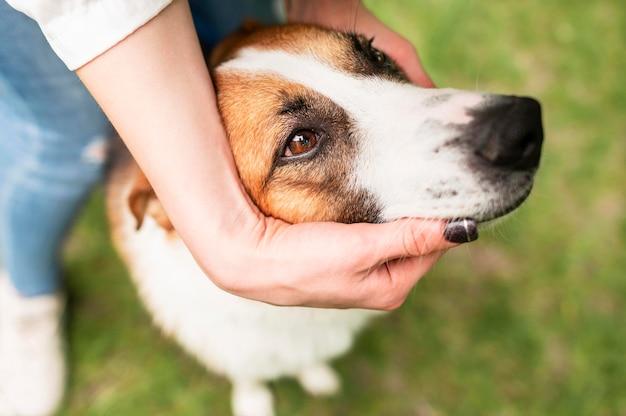 外で時間を楽しんでいるクローズアップのかわいい犬