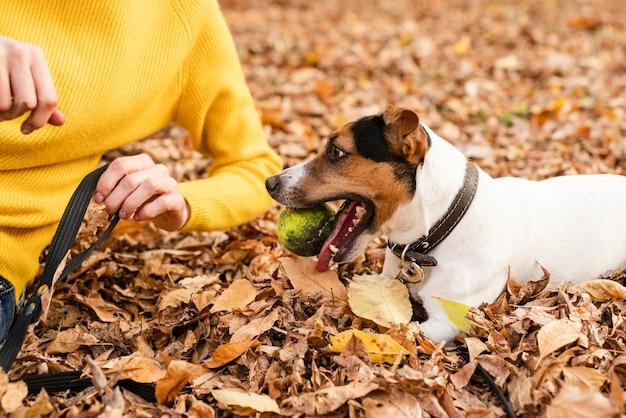 Крупным планом милая собака играет с мячом