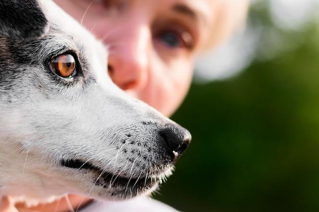 Милая маленькая собака конца-вверх наслаждаясь временем снаружи