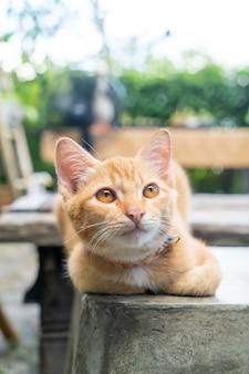 クローズアップかわいいオレンジ色の赤ちゃん猫