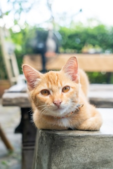 Крупный план милый оранжевый котенок