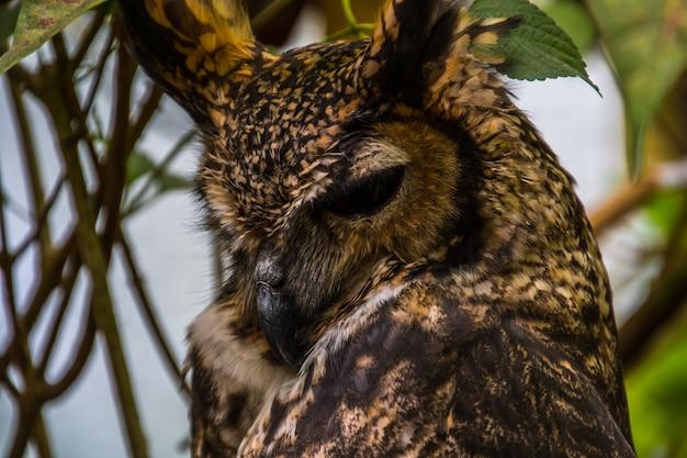 Close up of a cute owl