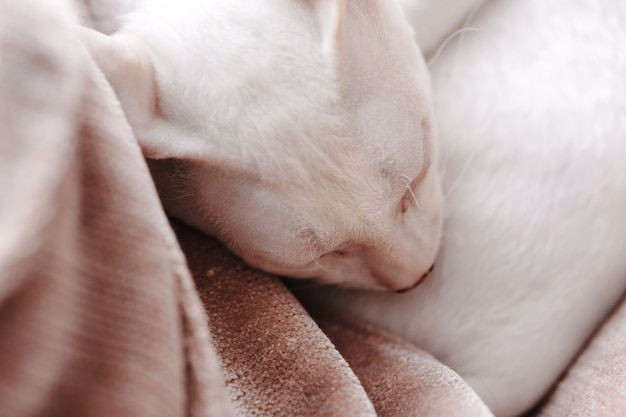 Close-up of cute sleeping kitten at home