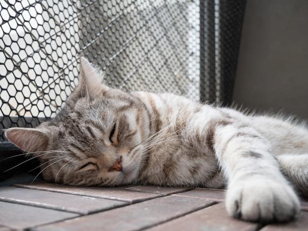나무 바닥에 귀여운 줄무늬 고양이 잠을 닫습니다