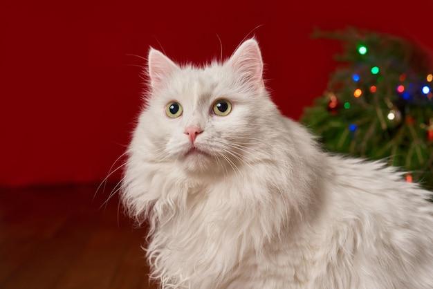 Крупный план, милый белый кот на красном фоне для новогодней рождественской открытки, крупный план