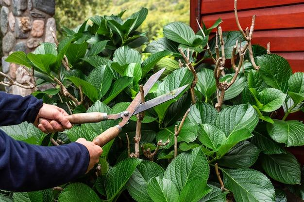 挿し木植物の葉をクローズアップ