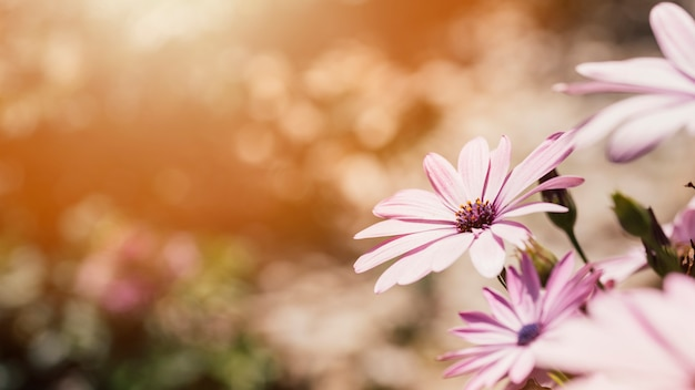 Close up daisies outdoors