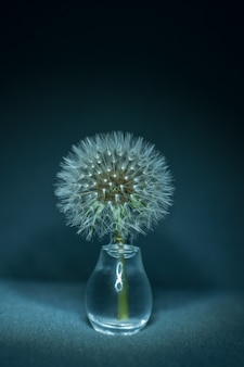 Close-up of a dandelion in a small glass vase
