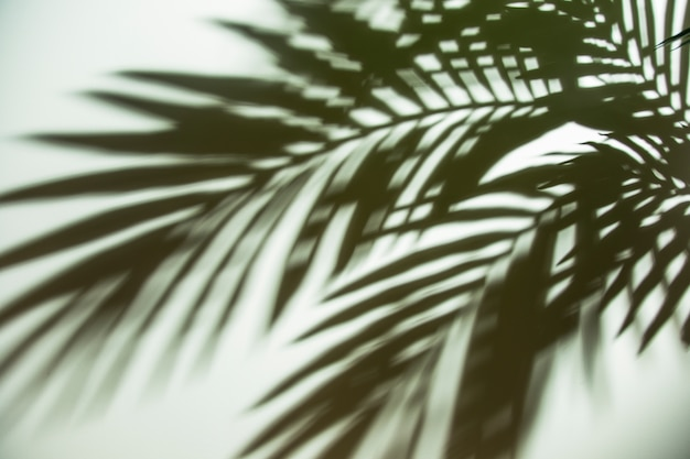 Close-up of dark green blurred palm leaves shadow on white backdrop