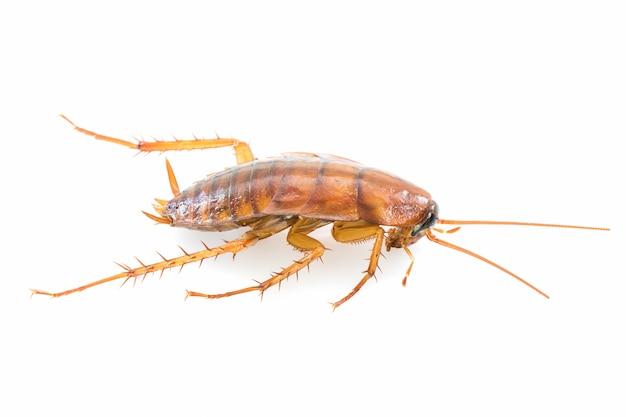 Close up dead cockroach