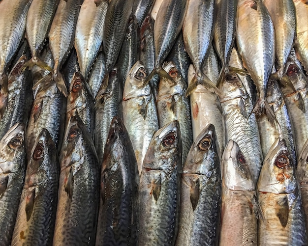 Close up of dead mackerel fish on ice in stall at the market.