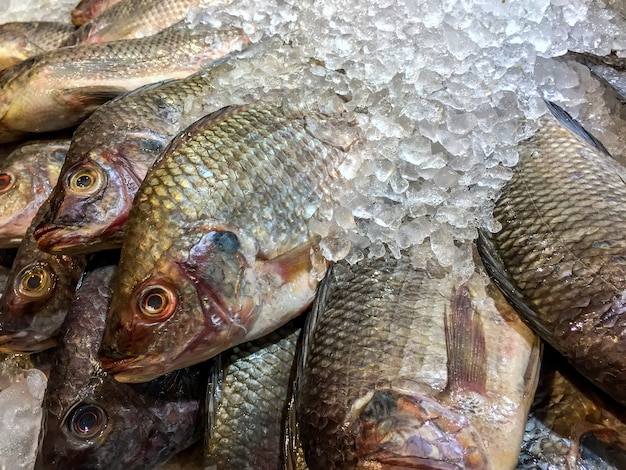Close up of dead nile tilapia fish on ice at the market.