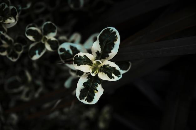 Крупный план нежного зеленого и белого растения