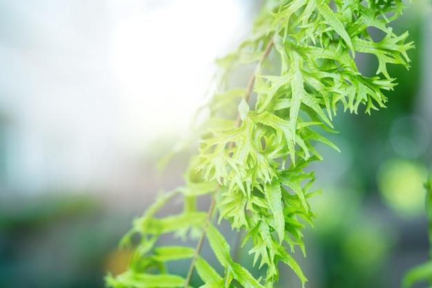 Close up detail of  a  fern.