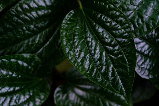 Close up detail of green tree leaf in the jungle