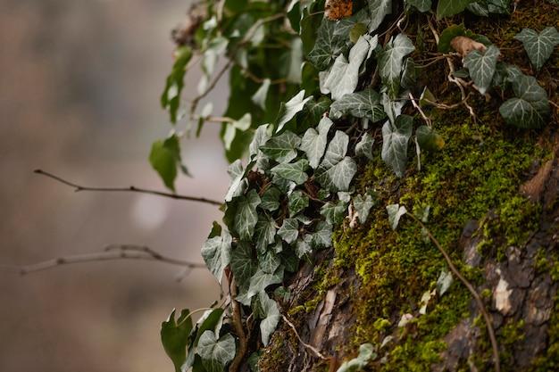 野生の森のクローズアップの詳細