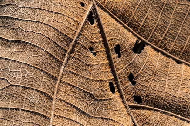 Close up detial of brown dry leaf texture