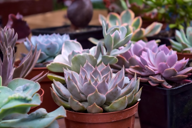 Close up of different varietal agave succulent plants