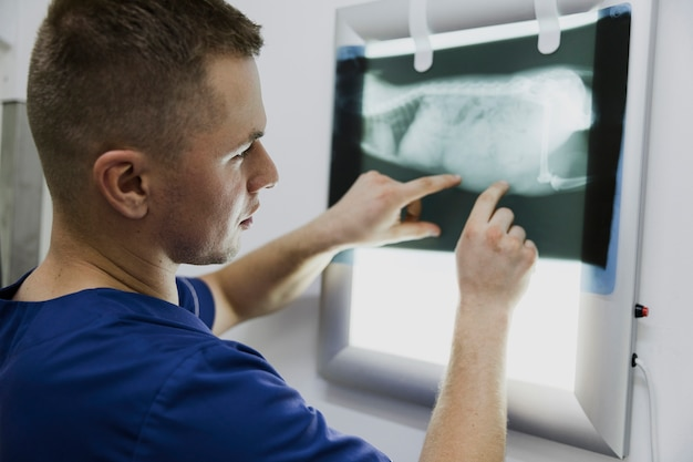 Close-up doctor checking animal radiography